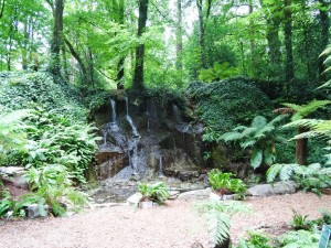 Fern Garden and Waterfall