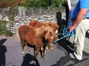 Mini horses!